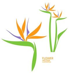 Bird paradise tropical flower vector