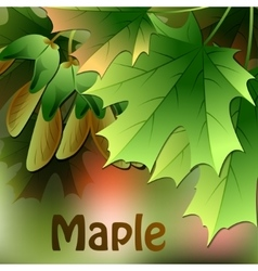 Maple leaves on abstract blurred background vector image