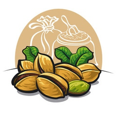 Pistachios nuts vector