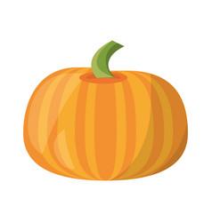 pumpkin vegetable natural vector image vector image