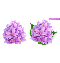 syringa flowers lilac 3d realistic icon vector image