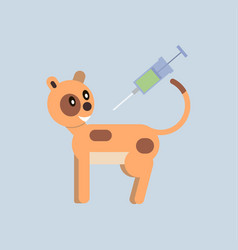 Vaccination cats vector
