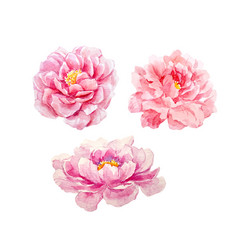 Watercolor peony set vector