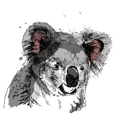 Colored hand sketch head koala vector