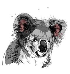 colored hand sketch head koala vector image