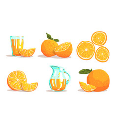 ripe sliced oranges and fresh juice set vector image
