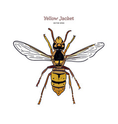 Yellowjacket is about a type wasp hand draw vector