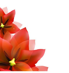 Borders Of Red Tulips And Blur vector image vector image