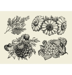 Flowers Hand drawn sketch of chamomile mimosa vector image vector image