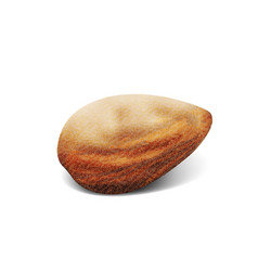 3d realistic almonds macro on white background vector