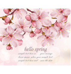 cherry flowers branch spring card background vector image