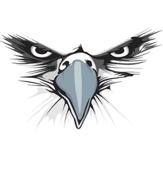 eagle eye vector image