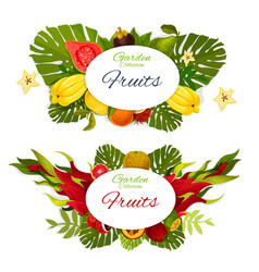 Exotic fruits or berries with tropical palm leaves vector