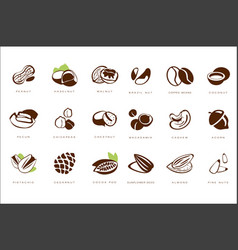 Named nuts set peanut haselnut walnut brazil vector
