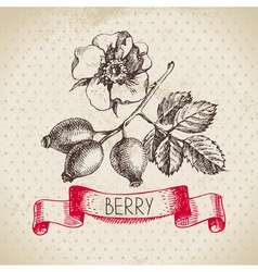 Rose hips Hand drawn sketch berry vintage vector image