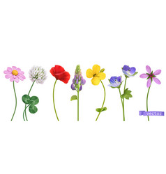 Wildflowers 3d realistic icon set vector