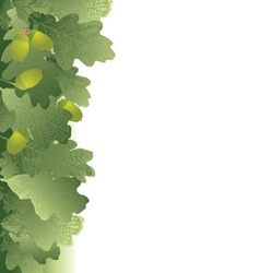 oak leaves and acorns background vector image