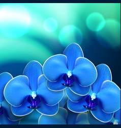 Blue flower orchid background vector