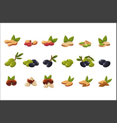 nuts and olives set nutritious natural products vector image