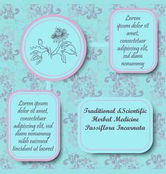 Retro style inforgraphic board for herbal medicine vector