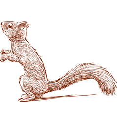 Ridiculous squirrel vector