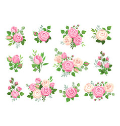 rose bouquets red white and pink roses flower vector image