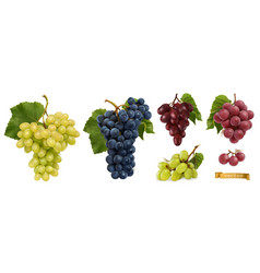 wine grapes table grapes fresh fruit 3d realistic vector image