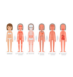 woman anatomy system and structure human body vector image