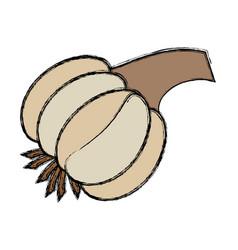 garlic vegetable natural vector image vector image