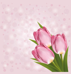 pink tulips on a pink background with blurred vector image