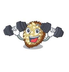 fitness marang fruit isolated on a cartoon vector image