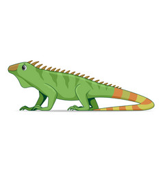 iguana lizard animal standing on a white vector image