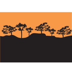 Silhouettes of tress in afternoon vector