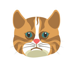 american shorthair brown white cat isolated on vector image