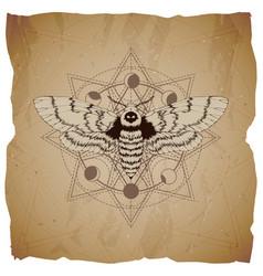 Dead head moth and sacred symbol vector