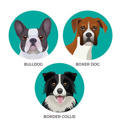 Short hair bulldog boxer dog and border collie vector