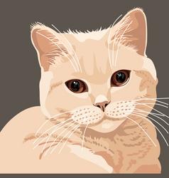 british lilac vector image vector image