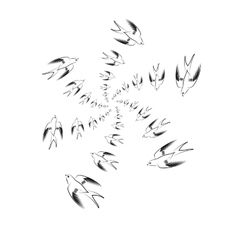 Flying Swallow Animal Pattern vector image vector image