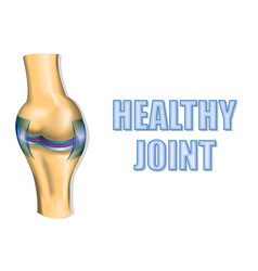 healthy joint vector image