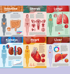 Cartoon human internal organs infographic template vector