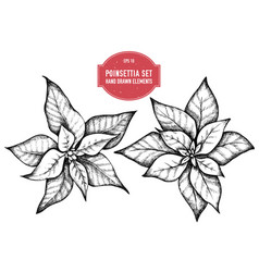 collection of hand drawn pionsettia vector image