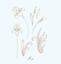 Iris flower fleur-de-lis vector