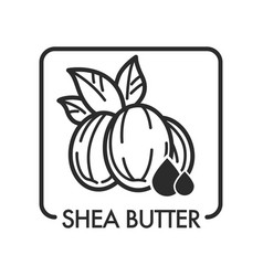 shea butter organic product used in cosmetology vector image