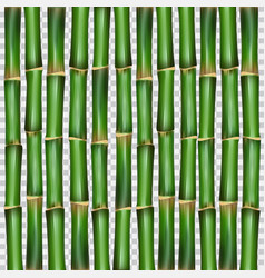bamboo grass oriental wallpaper vector image