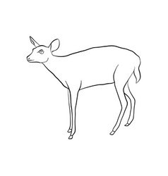 drawing doe vector image