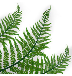 Green leaves tropical fern plant with shadow vector