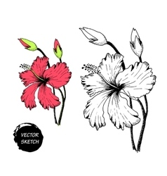 tropical Flowers in Sketch A vector image