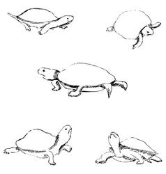 Turtles Pencil sketch by hand vector image