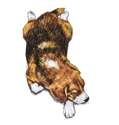 Sleeping Beagle vector image