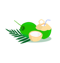 coconut and coconut juice isolated on white backgr vector image
